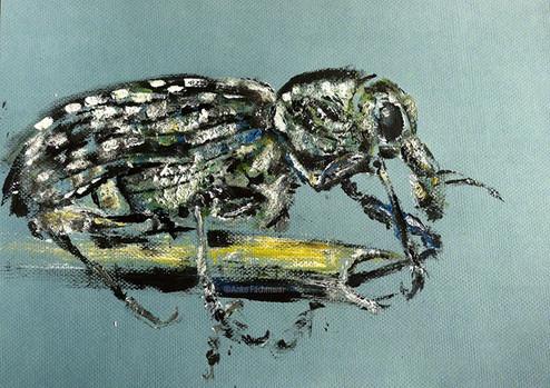 Diamond Weevil