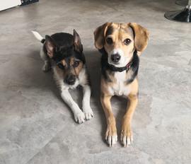 Milow (Jack Russell Terrier) & Frieda (Mischling)