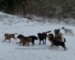 MundusCanis - Hundespaziergang