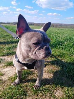 Emma (Franz. Bulldogge)