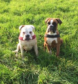 Deliah & Casper (Boxer)