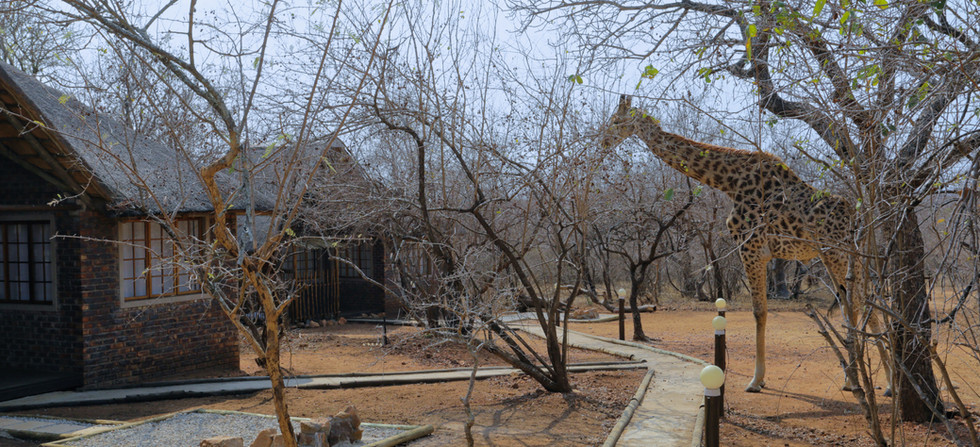 Tusk Bush Lodge Bungalow 2 & 3 Giraffes.