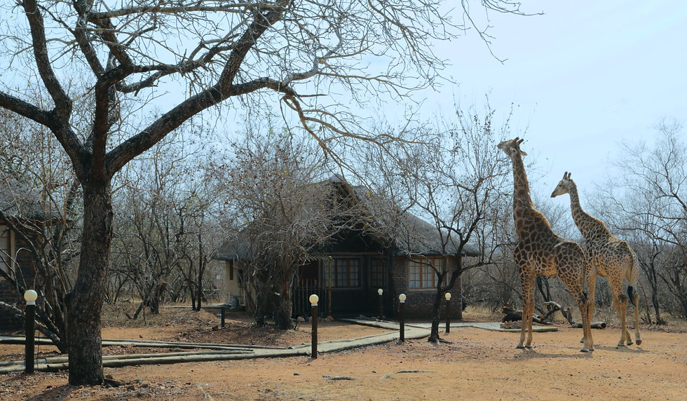 Tusk_Bush_Lodge_Kruger_National_Park.jpg