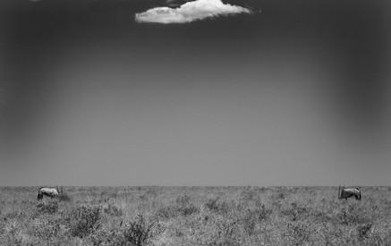 Two Gemsbock & Cloud .jpg