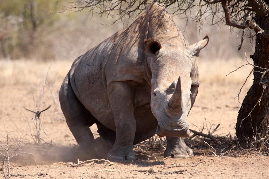 White+Rhino