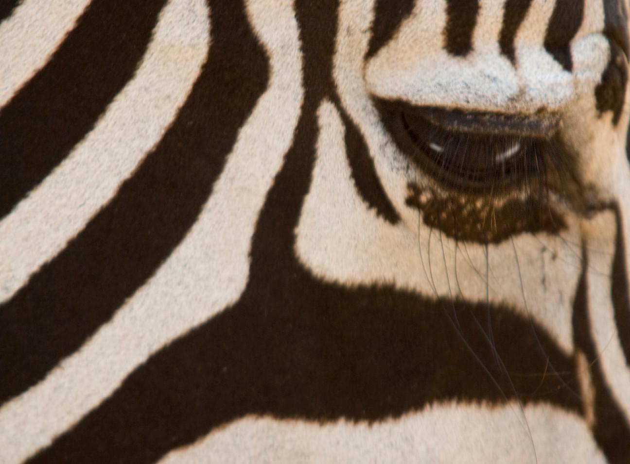 Zebra Close uo