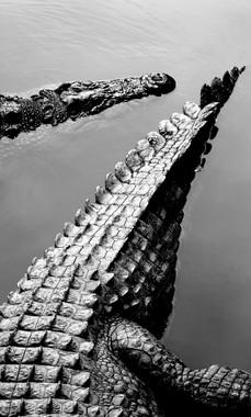 Croc .jpg