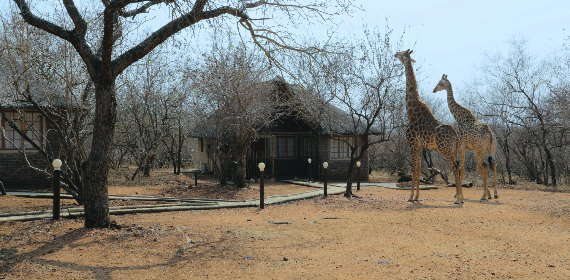 Tusk Bush Lodge Bungalow 2 & 3 Giraffes.