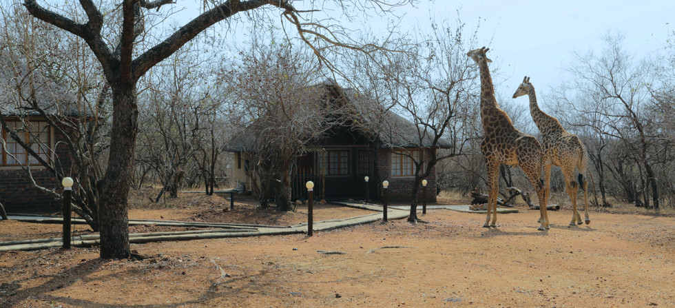 Tusk Bush Lodge Bungalow 3 Giraffes.jpg