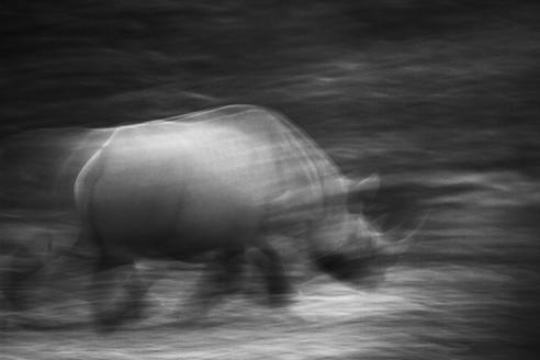 Rhino Blur.jpg