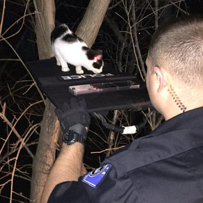 Officer uses Minuteman 2 Ballistic Shield to rescue cat stuck in tree