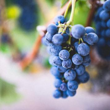 Wine Beginnings
