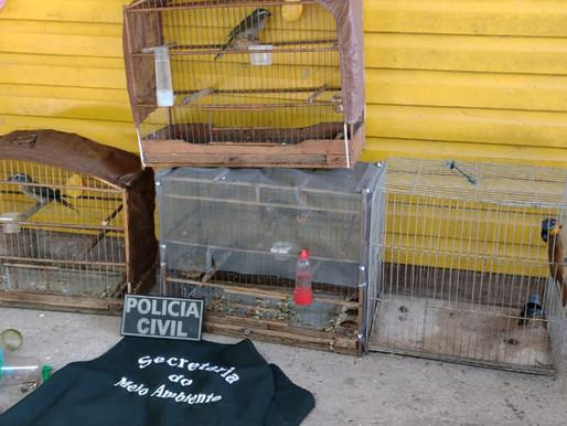 Pássaros em cativeiro são resgatados em Guaíba