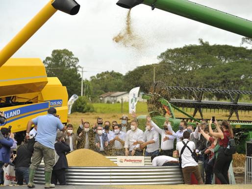 Colheita do Arroz é aberta oficialmente em Capão do Leão