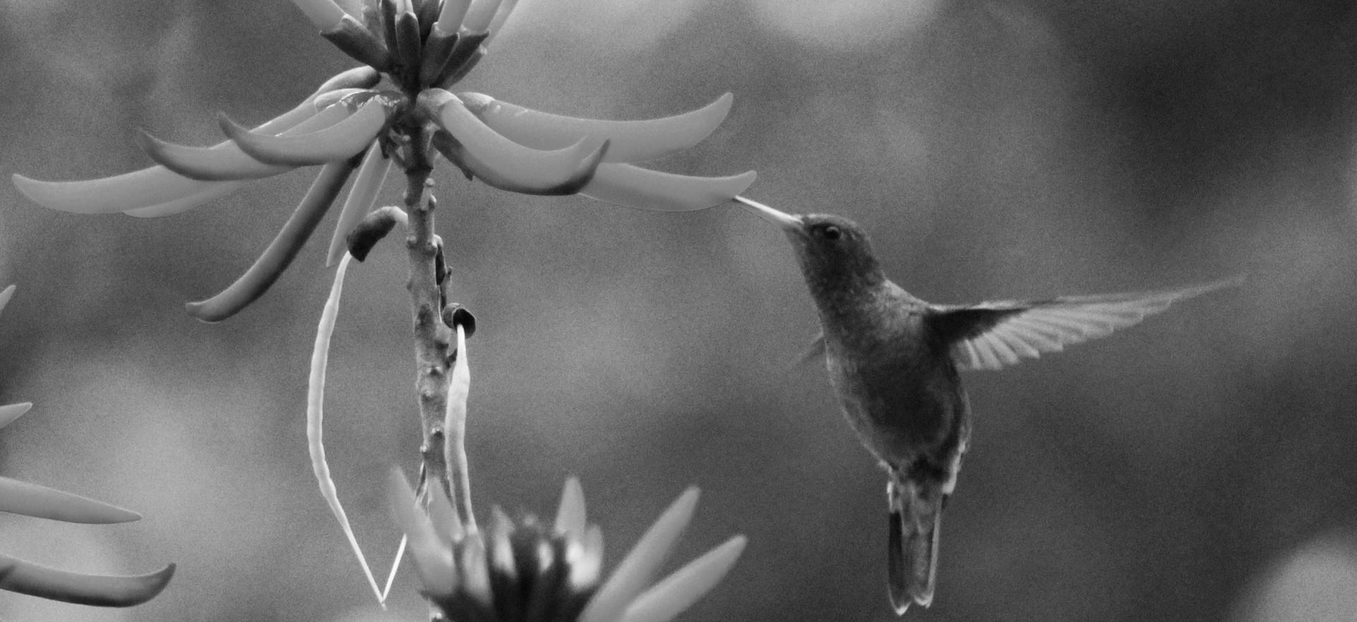 No meu jardim/Foto Valmir Michelon