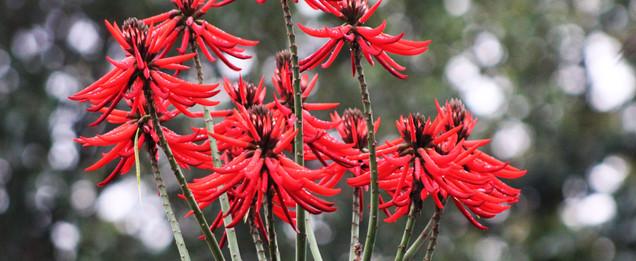 Flores no bairro Ermo/Foto Valmir Michelon