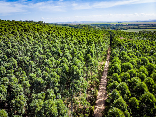 CMPC reforça seu compromisso com a restauração de ecossistemas