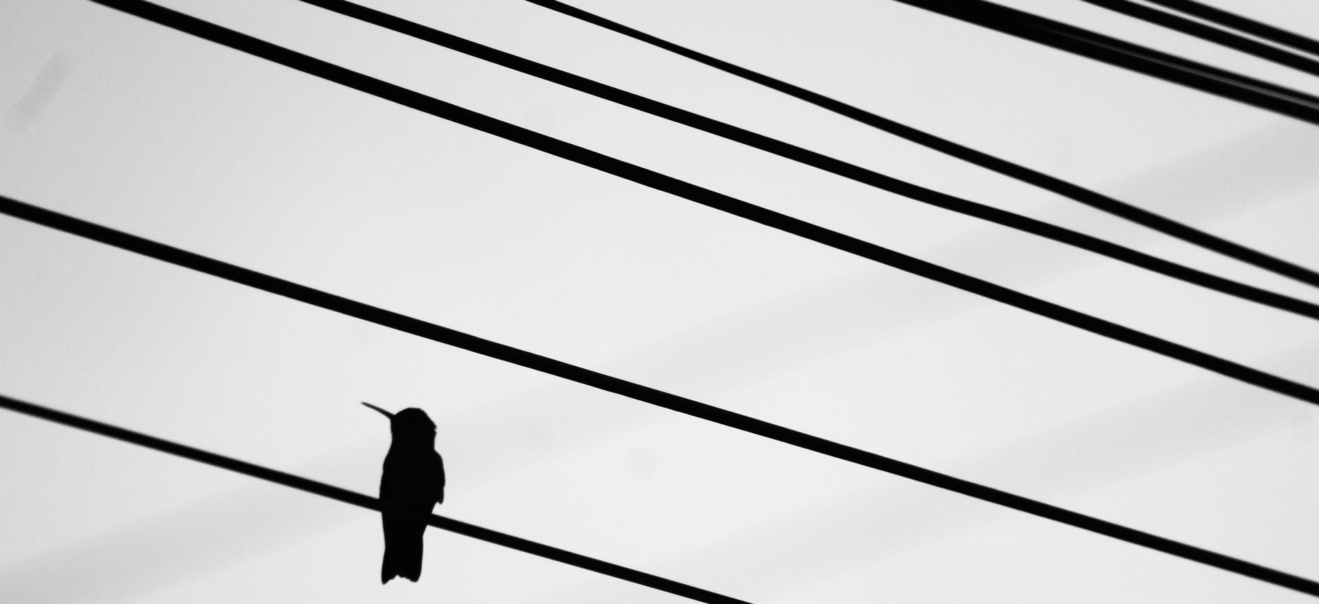 Descanso/foto Valmir Michelon