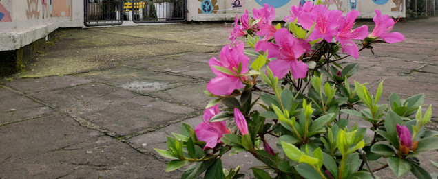 Beleza nas ruas, faça sua parte/foto Valmir Michelon