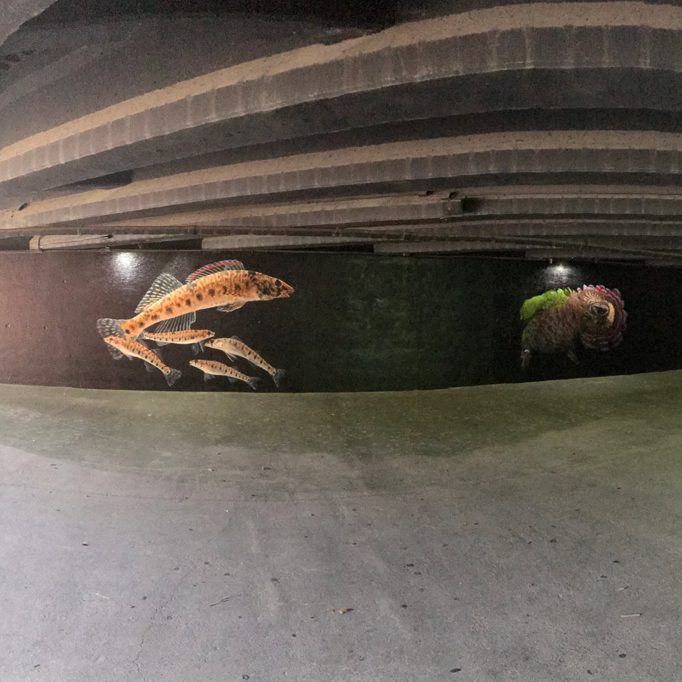 Finished tunnel before kiosks