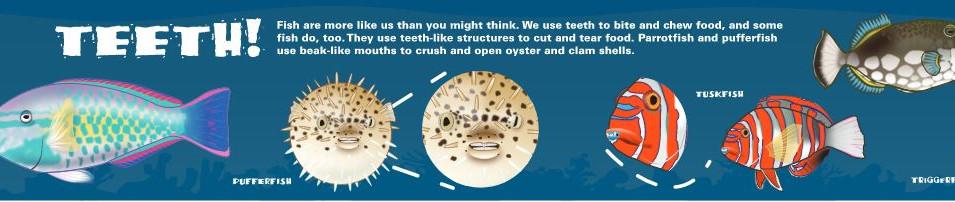 Fish Teeth light box
