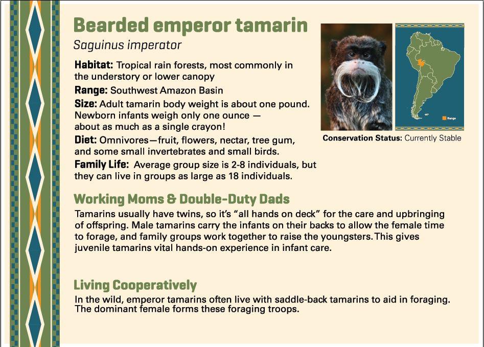 Bearded Emperor Tamarin digital