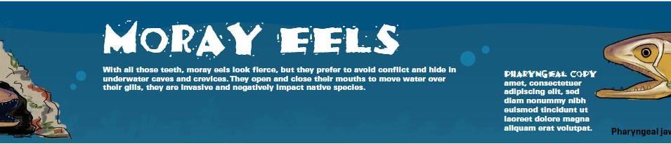 Moray Eel light box
