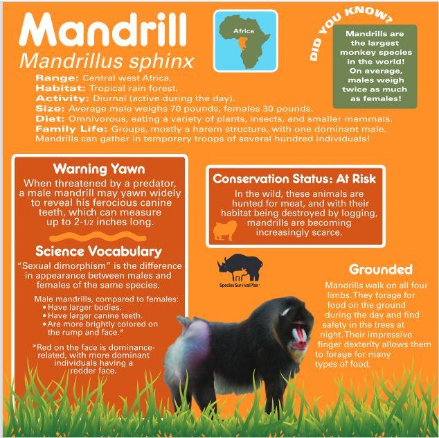 Mandrill I.D. digital rendering