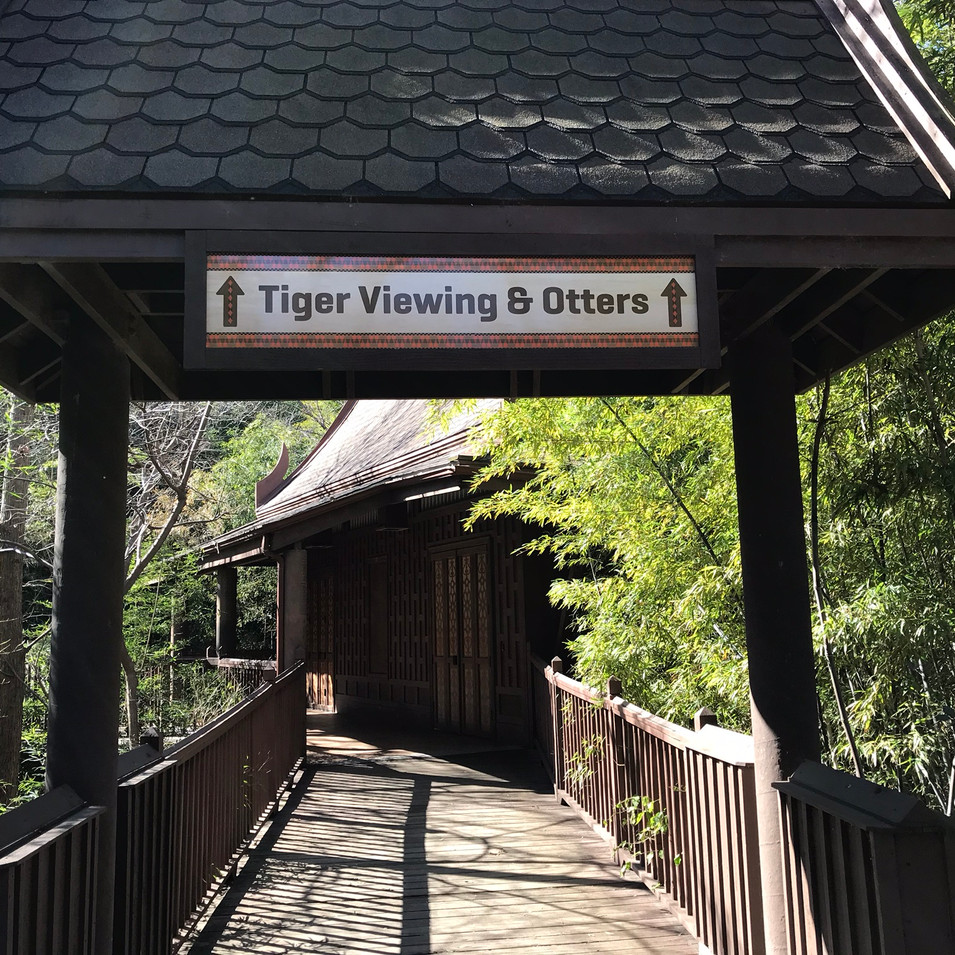 Tiger viewing wayfinding