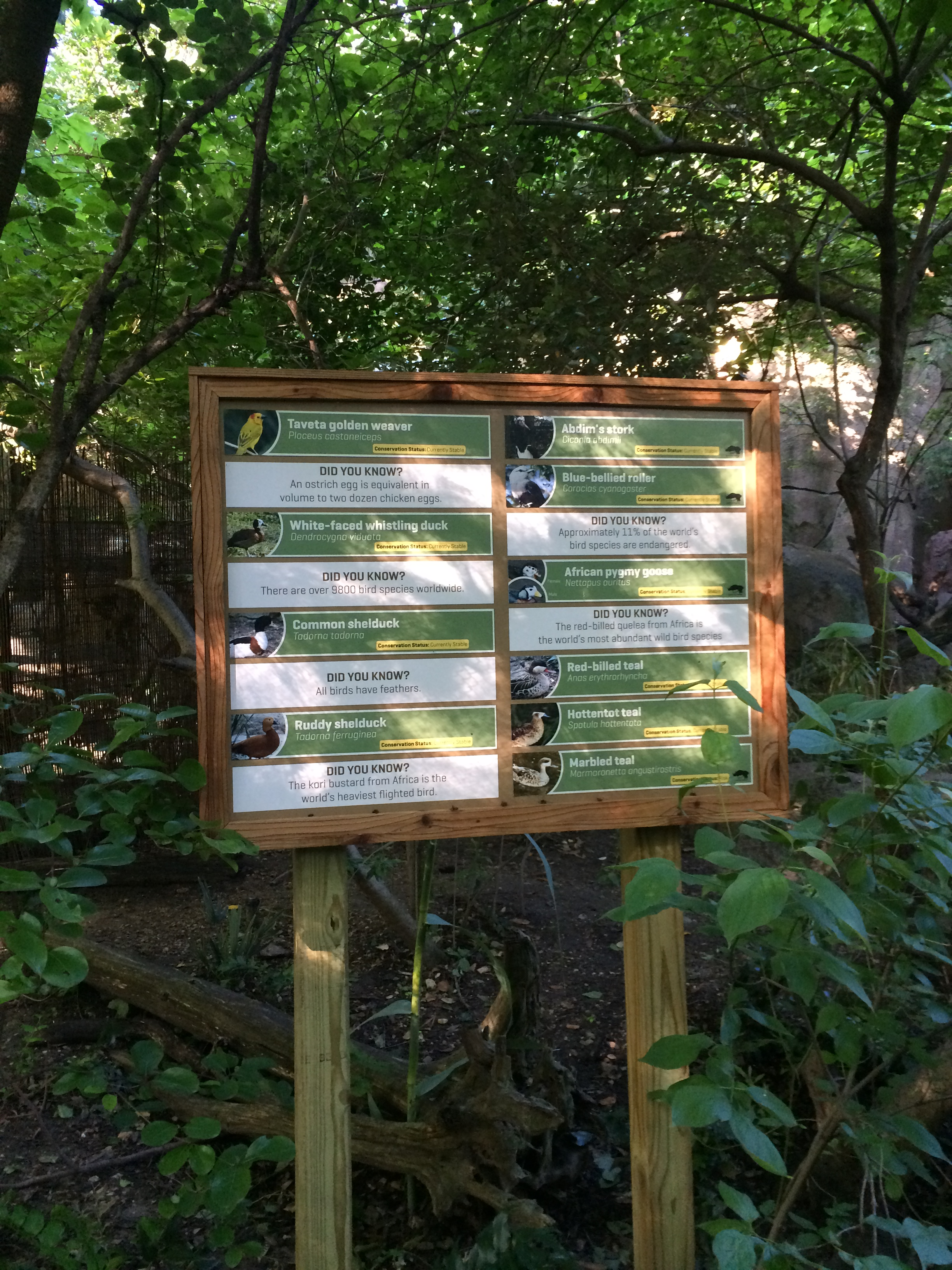 Forest Aviary Graphics