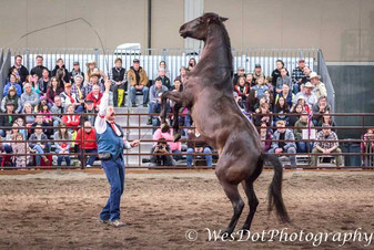 lichman horse on legs.jpg