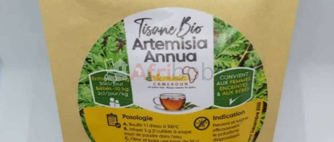 Ateleir GCHCR-Technique et Culture d'Artemisia annua et d'Artemisia afra