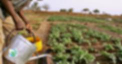Bannière_agricole_2.png