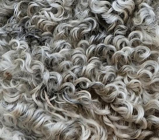 fleece frodo jan 2020.jpg