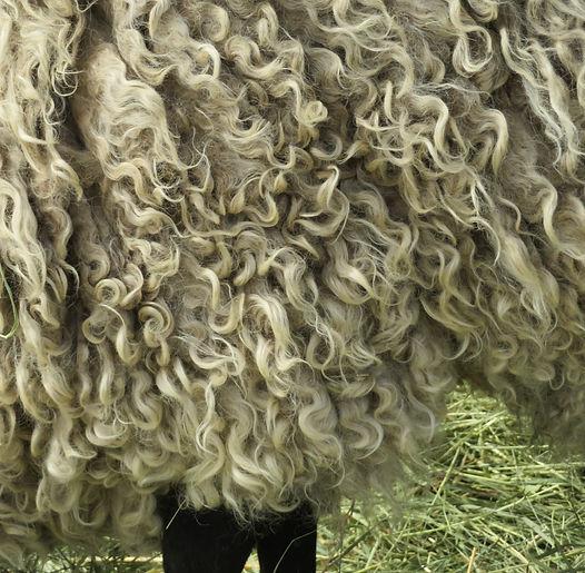 Inigo M 07292020 fleece.JPG