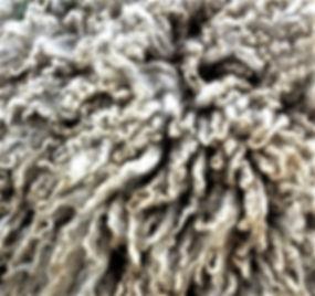 Reino's wool.jpg