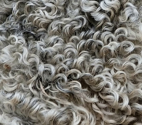 Frodo 2020 post shearing.jpg