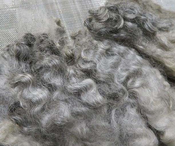 Inga's fleece, 9/5/20.JPG