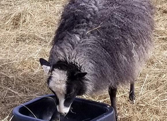 Anja's Lamb Fleece