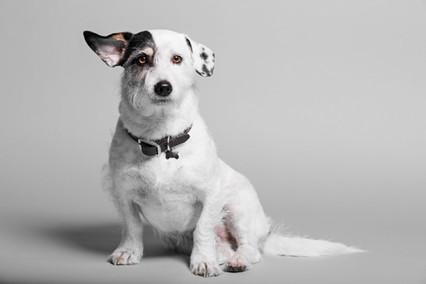 Jack Hardcastle - The Dog