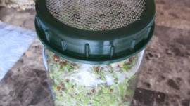 Grow your own Sprouts...So Insanely Simple!!!