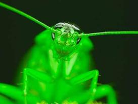 Roaches Brigade
