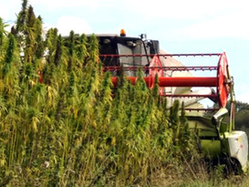 Kentucky hemp production expected to triple in 2017