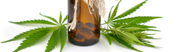 1440x434why-cannabis-oil-is-good-for-your-skin