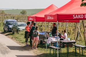 Hovoranskými vinohrady za vínem