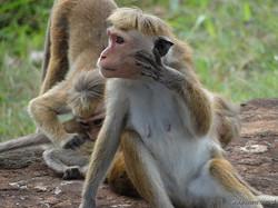 srilanka 06.jpg