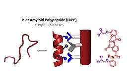 Amphiphilic Oligoamide alpha-helix peptidomimetics inhibit islet amyloid polypeptide aggregation