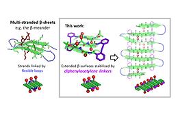 Hybrid Diphenylalkyne-Dipeptide Oligomers Induce Multi-Strand beta-Sheet Formation