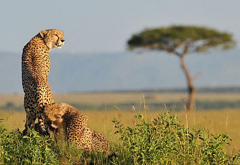 safari-advice-for-first-timers.jpg