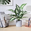 Thumbnail: CADNLY Modern Indoor Artificial Potted Plant (Green)